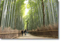 Arashiyama Is One Of The Most Por Spot In Kyoto If This First Time To Visit Traveling Your Best Choice For You