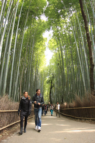 Bamboo Grove Walk
