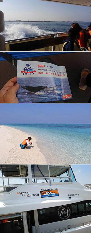 Whale Watching in Okinawa