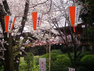 hanami at ueno park mustlovejapan video travel guide. Black Bedroom Furniture Sets. Home Design Ideas