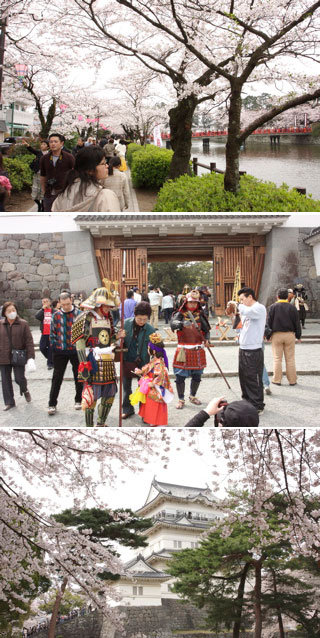 Hanami at Odawara Castle