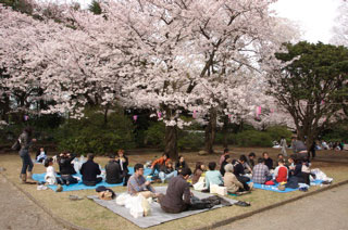 Hanami at Shiroyama Park