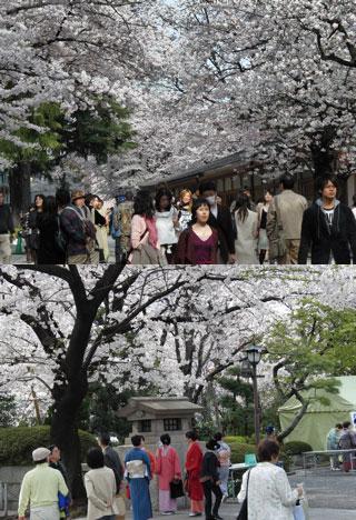 hanami at yasukuni shrine mustlovejapan video travel guide. Black Bedroom Furniture Sets. Home Design Ideas