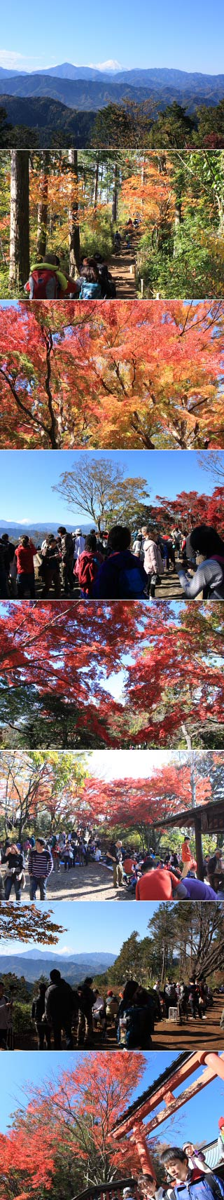 Koyo of Mt. Takao