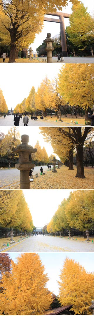 Ginkgo ave. of Yasukuni Shrine